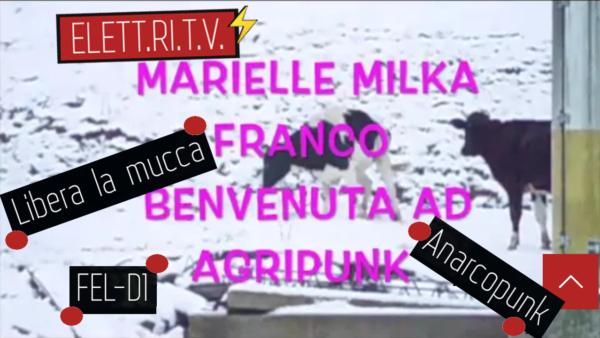 libera_la_mucca_fel_d1_anarcopunk_danza_benvenuto_marielle_ad_agripunk_onlus_bucine_toscana_rifugio_sociale_animali